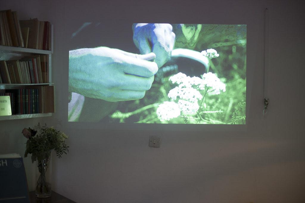 Projection du film sur les plantes sauvages à Saint-Ouen.