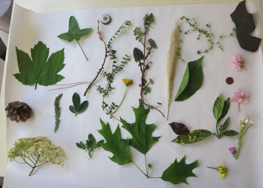 Échantillon des végétaux trouvés près de la maison de quartier du Landy